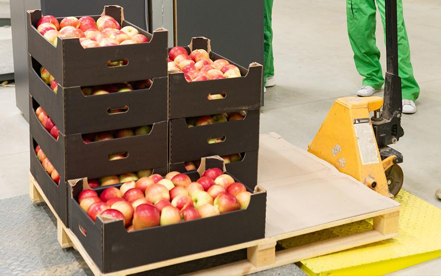 jabłka wpaletach